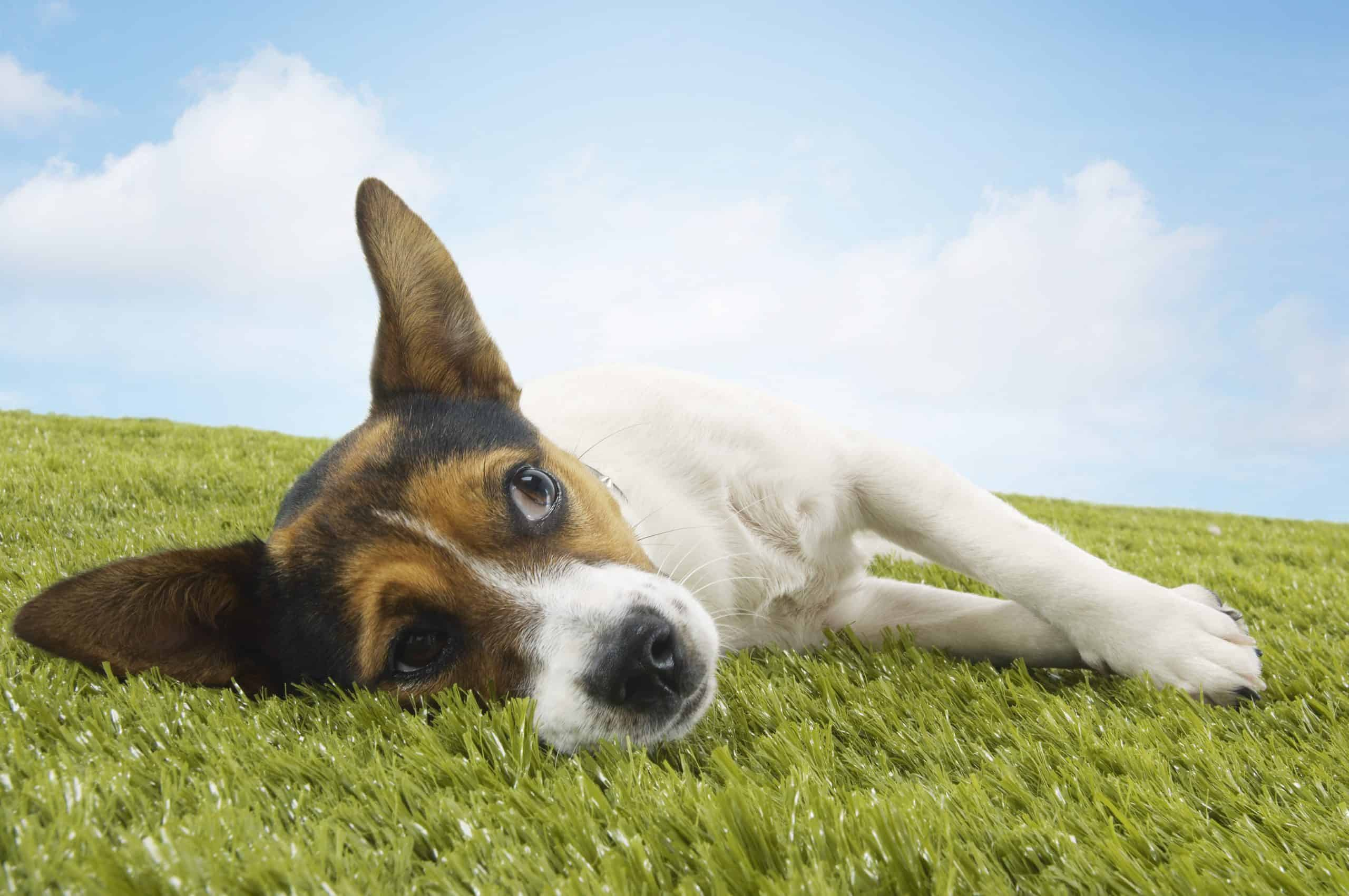 Geld Verdienen Mit Hundefutter